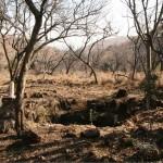 Malapa-völgy, Dél-Afrika 2011. A megtalálás helye. Fotó: Lee Berger