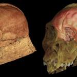 Az MH1 koponya belső felülete alapján rekonstruált agyállomány