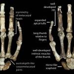 A kézcsontok jellegzetességei