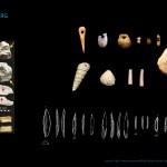 Mamut mega-lelőhelyek: Grub-Kranawetberg - megkarcolt csontok és különféle eszközök