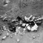 Mamut mega-lelőhelyek: Krakkó-Spadzista B - ásatási felvétel