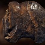 Mamut mega-lelőhelyek: Predmosti - mamutfigura